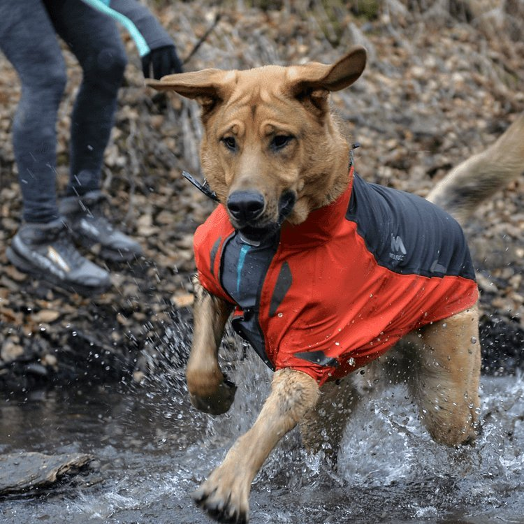Aegis All-Weather Dog Jacket