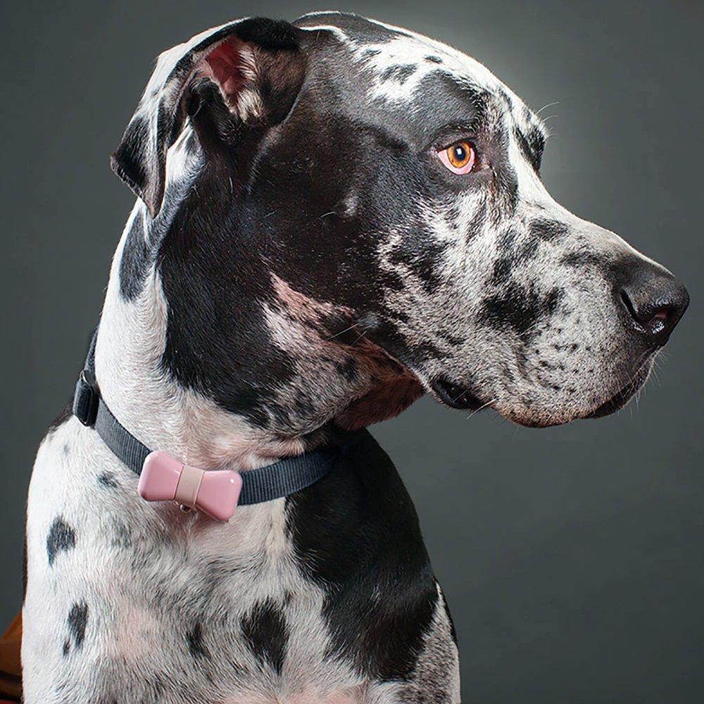 BowTie Dog Activity Tracker by WonderWoof