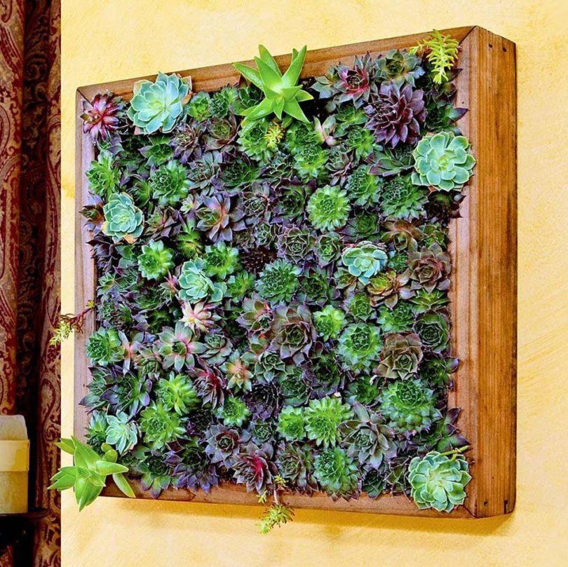 Secret Garden Frame