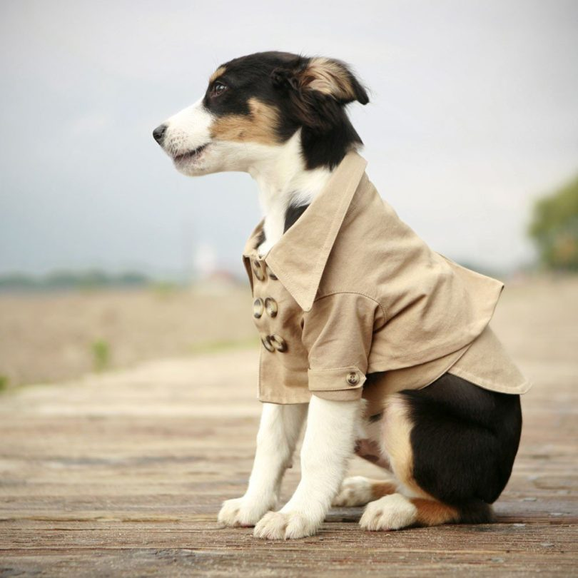 Westerly Trench Dog Coat