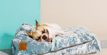 Mirage Velvet Slouch Dog Bed