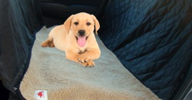 Ultimate Pet seat cover and dog hammock for cars