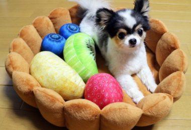 Fruit Tart Pet Bed