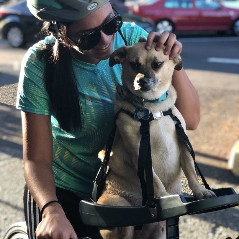 BuddyRider Bicycle Pet Seat