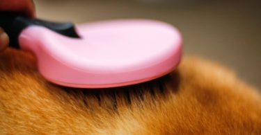 DELE Dog & Cat Brush for Grooming Short or Long Hair
