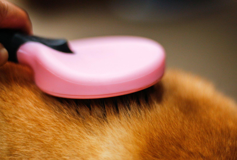 DELE Dog & Cat Brush for Grooming Short or Long Hair