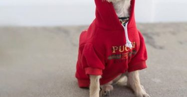 Pucci Dog Park Hoodie