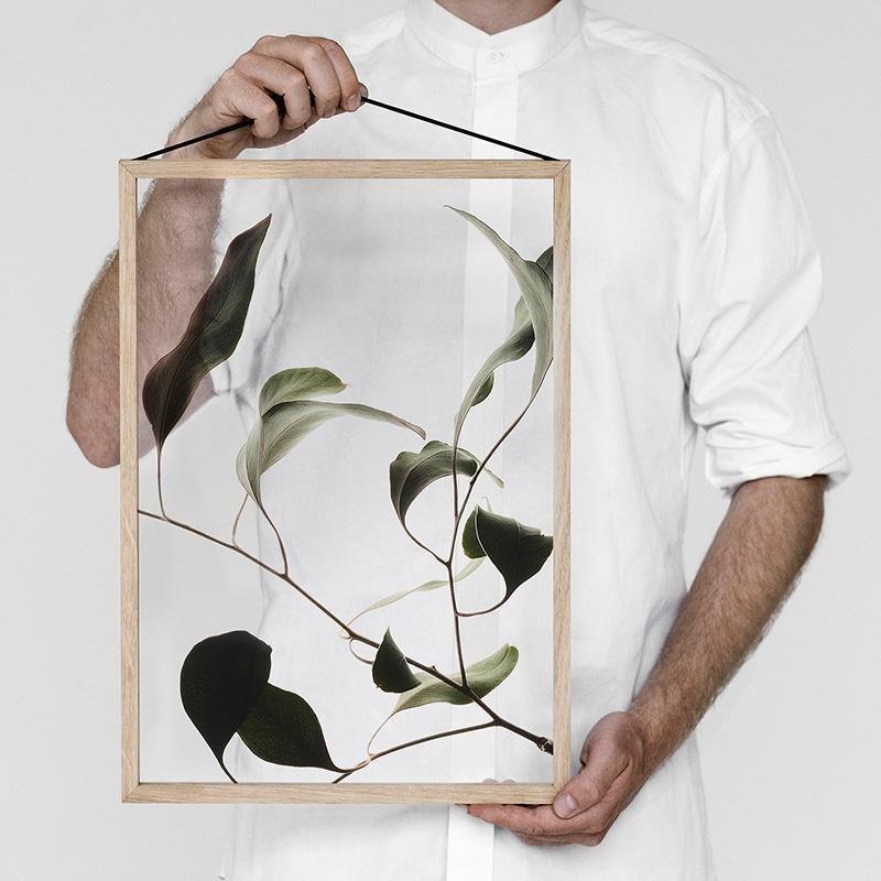 Floating Leaves Transparent Print 09