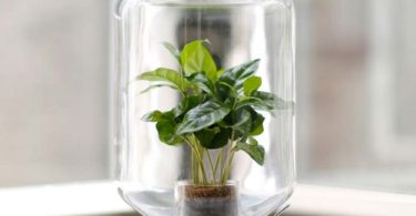 Pikaplant Jar Self-Sufficient Greenhouse