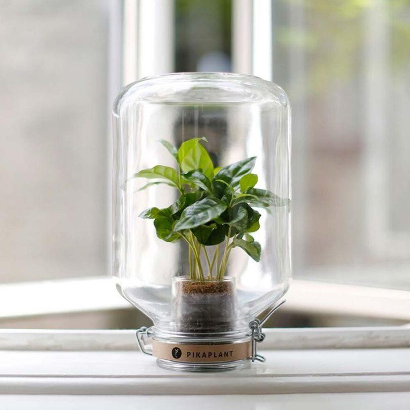 Pikaplant Jar Self-Sufficient Greenhouse