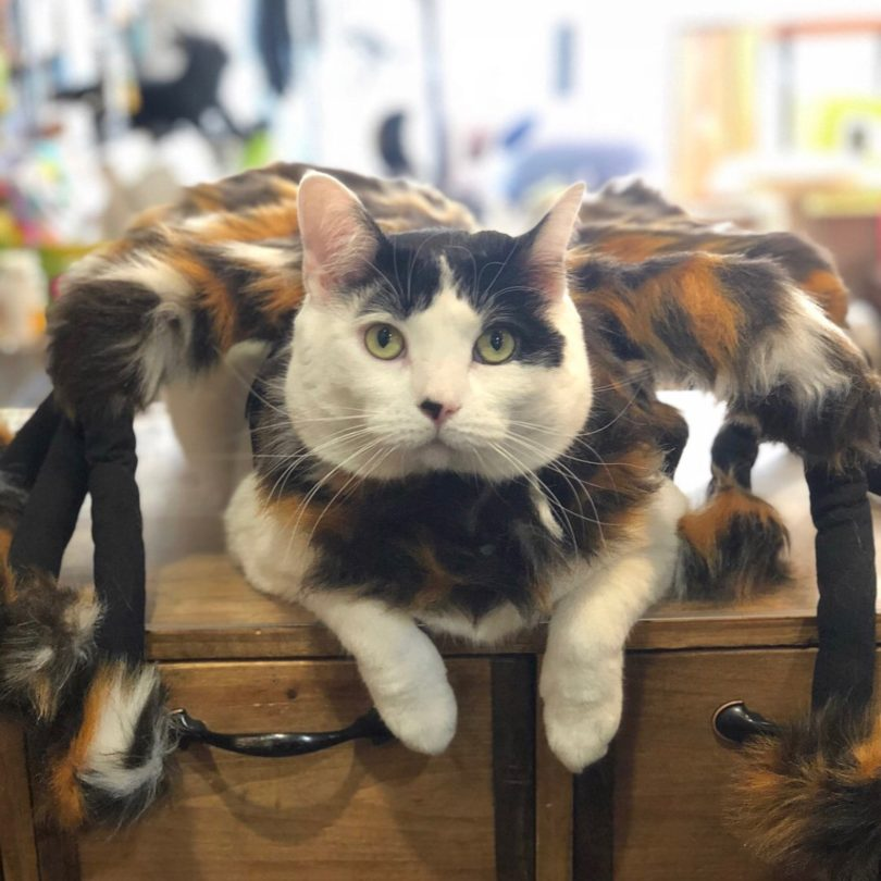 Spider Dog & Cat Costume