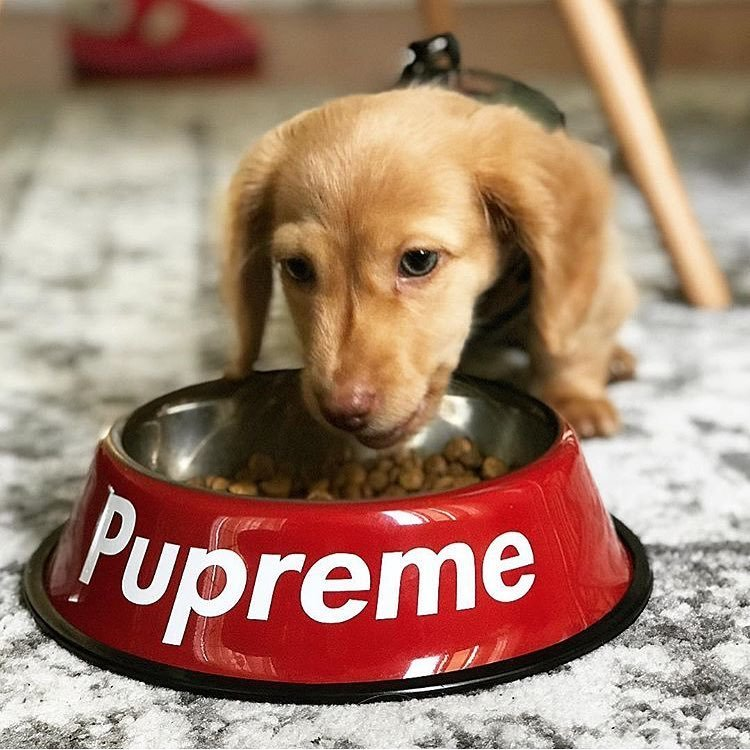 Pupreme Stainless Steel Dog Bowl