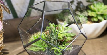 Modern Tabletop Black Glass Geometric Terrarium