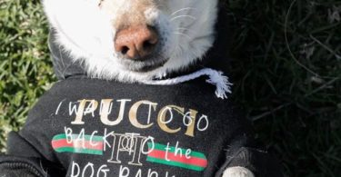 Pucci Dog Park T-shirt