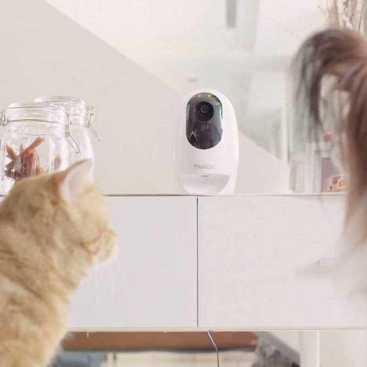 Pawbo Life Pet Camera & Treat Dispenser