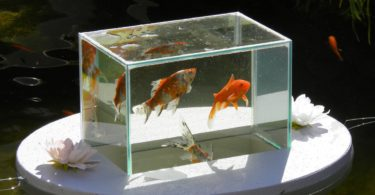 Flying Aquarium Oval Fish Observatory