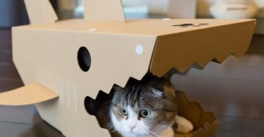 Shark House for Cats