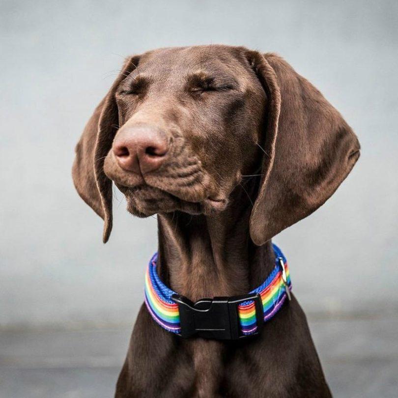 Boon Dog Collar