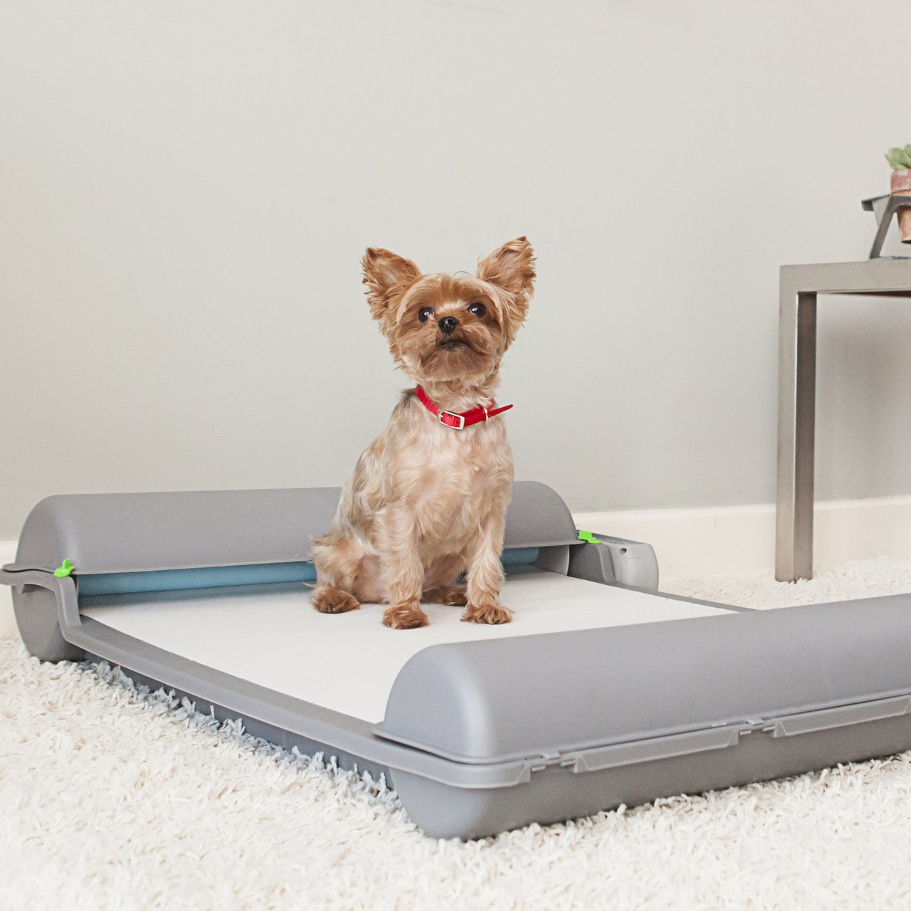 Brilliant Pad Self-Cleaning Automatic Indoor Dog Potty