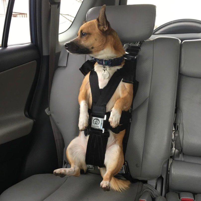 The Rocketeer Pack Multifunctional Harness
