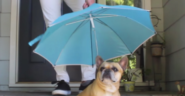 Pour-Protection Dog Leash Umbrella