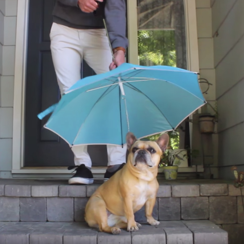 Pour-Protection Dog Leash Umbrella