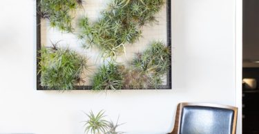 AirplantFrame Giant