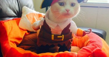 Pirate Dog Cat Costume