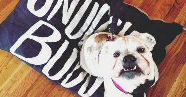 Snuggle Buddy II Pet Bed