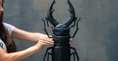 Faux Insect Taxidermy Black Beetle