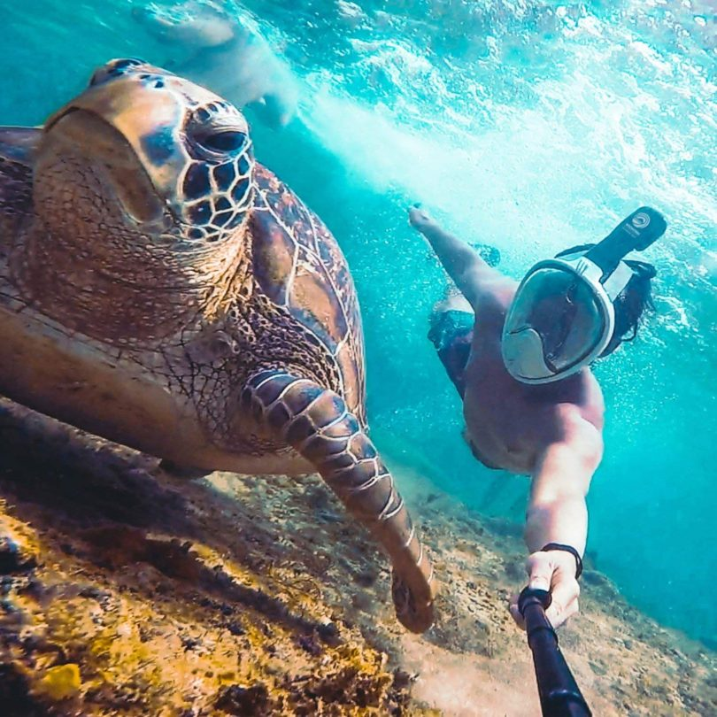 WildHorn Outfitters Seaview 180° GoPro Compatible Snorkel Mask