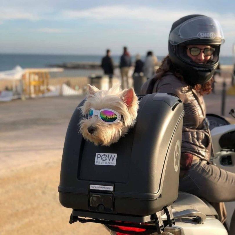POW Pet On Wheels Pet Carrier