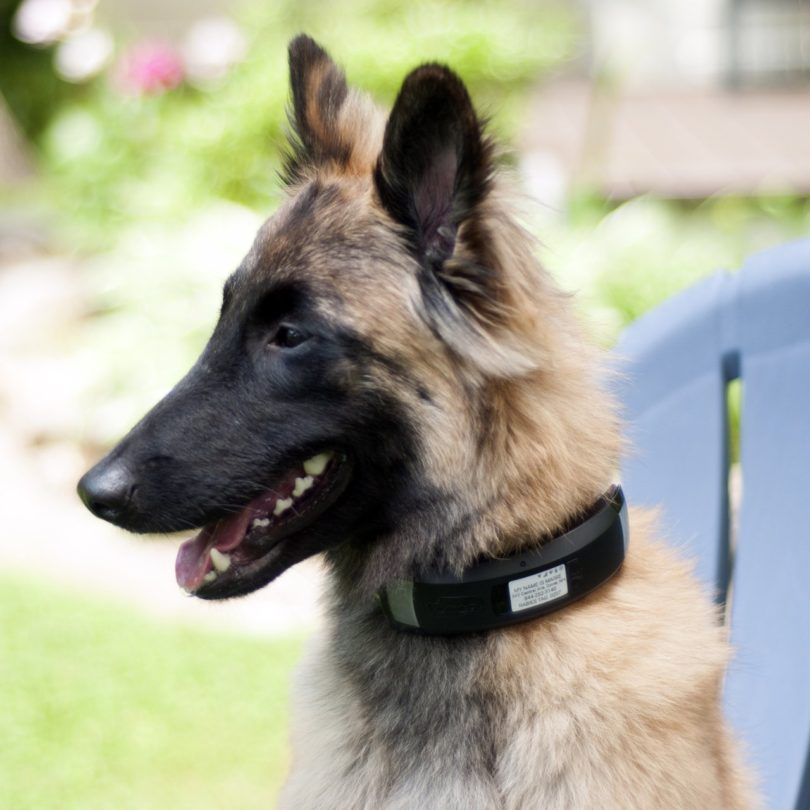 Explore Smart Collar