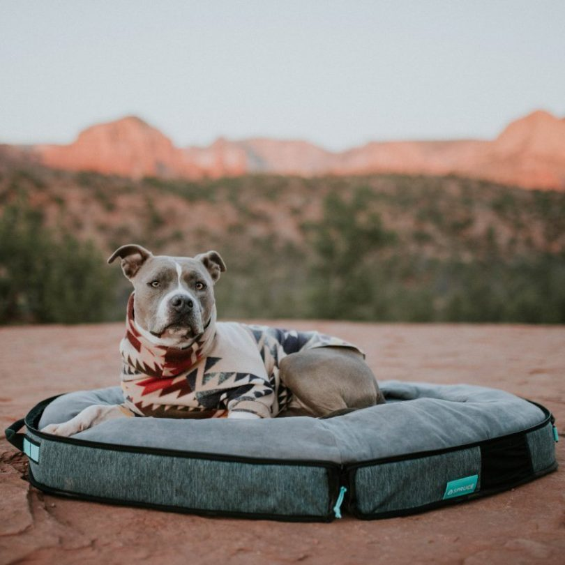Spruce Travel Dog Bed