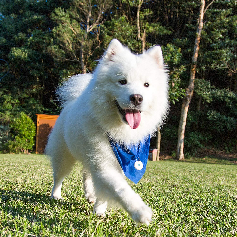 DOTT The Smart Dog Tag