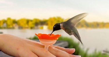Hummer Ring Hummingbird Feeder