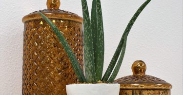 Costa Farms Aloe Pot