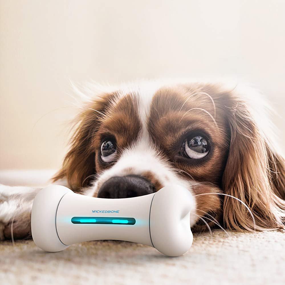 Wickedbone Smart Dog Toy