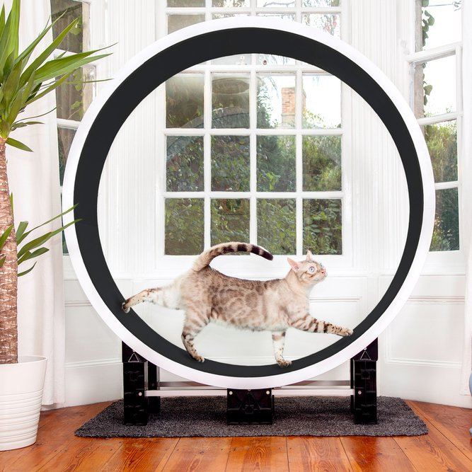 Ferris Cat Exercise Wheel