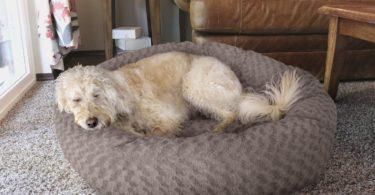 FurHaven Plush Donut Pet Bed