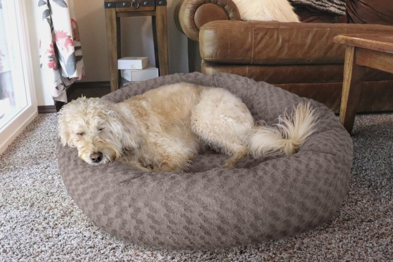 FurHaven Plush Donut Pet Bed