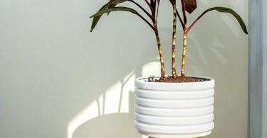 Groove Ceramic Planter