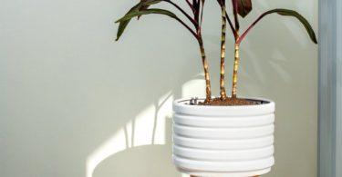 Groove Ceramic Planter