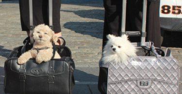 Pet-Trek Pet Carrier Dolly