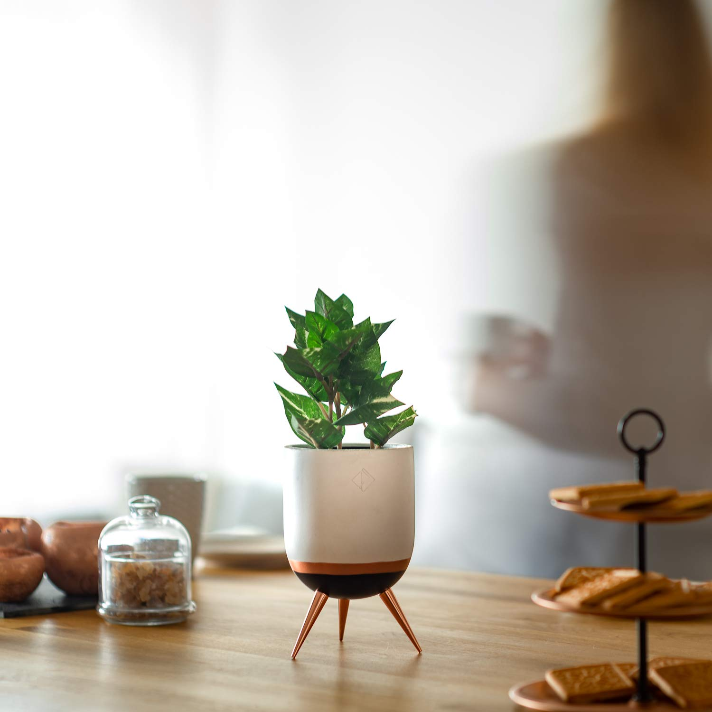 PERNER Home White Flower Pot