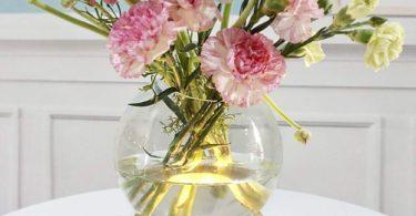 MJ PREMIER Plant Terrarium Glass Vase