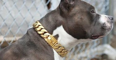 The Kilo Cuban Link Luxury Collar