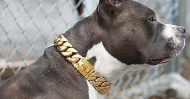 The Kilo Cuban Link Luxury Collar