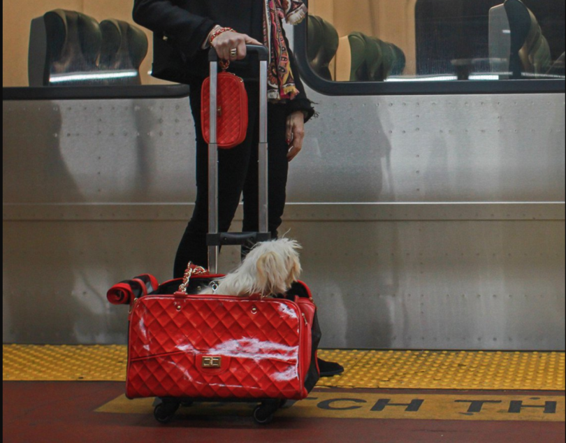Coco Pet Carrier With Pet-Trek