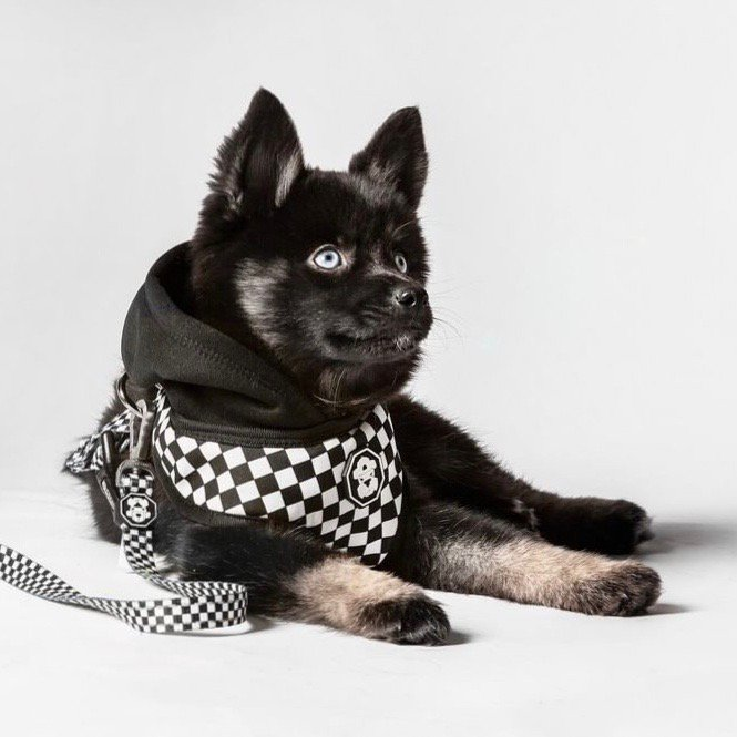 The Checkerboard Hoodie Harness